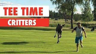 Tee Time Critters