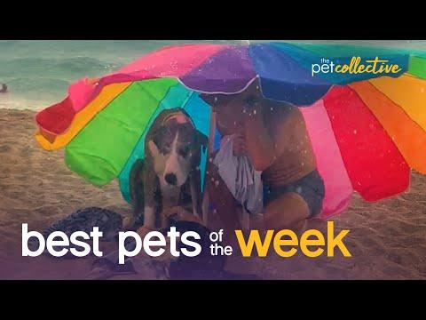 The Worst Beach Day Ever!!!!| Best Pets of the Week Video