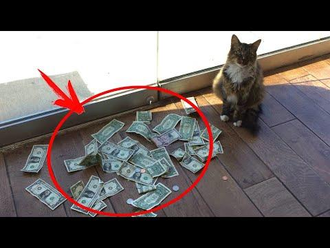 This cat brought his owner a lot of MONEY every day. #Video