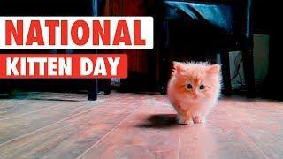 Most Adorable Kittens | National Kitten Day 2017