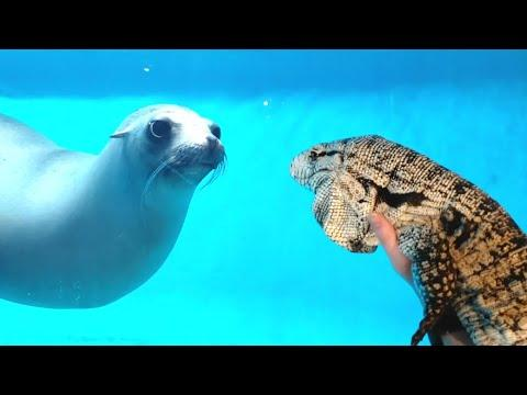 Seal Sees A Lizard For The First Time Video