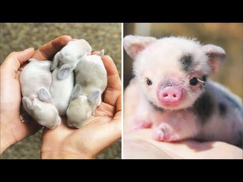 Cute baby animals Videos Compilation cute moment of the animals - Cutest Animals #3