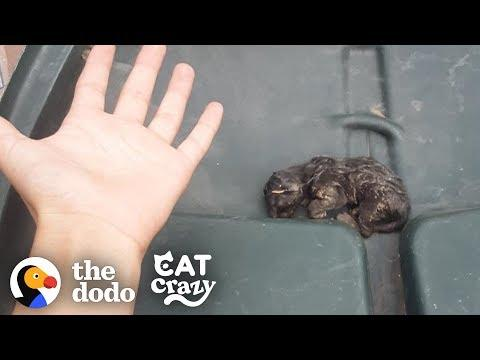 Teeny Kitten Found in the Trash Nurses on His Dad's Hand When He Sleeps