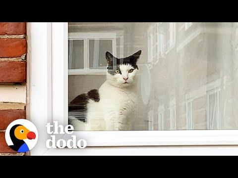 Cat Chronicles His Journey With Unrequited Love #Video