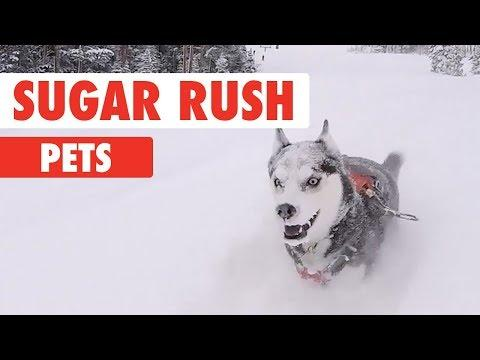 Sugar Rush Pets - They're Really Fast!