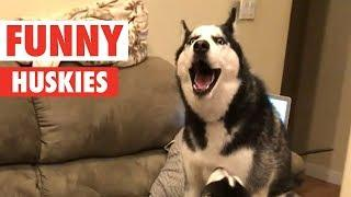 10 Funny Huskies Video Compilation 2017 | Breed All About It