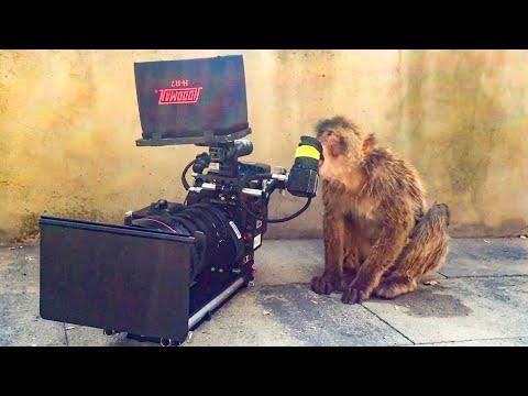 Animals vs Cameras Video | Top 5 | BBC Earth