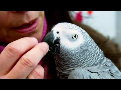 Top 5 Most Intelligent Animals | BBC Earth