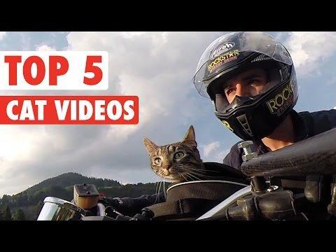 Top 5 Cat Videos || Feb 12 2016