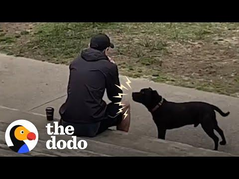 Rescue Pittie Screams At Strangers To Share Their Food #Video