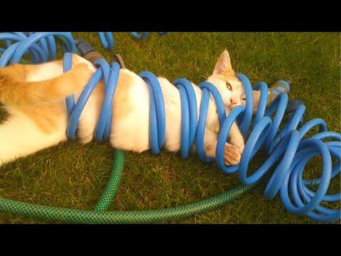 Monday Relax With Funny Cat And Dog Videos - Funny, Cute And Smart Pets