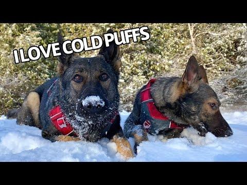 Dogs Enjoying The First Snowfall Of Winter Video