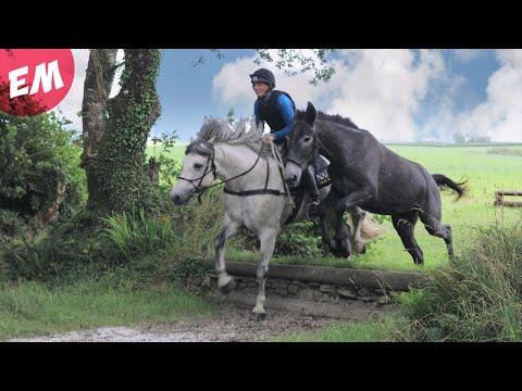 Mule tries XC schooling for the first time - Emma Massingale #Video