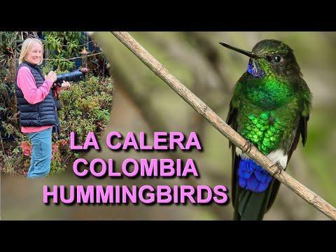 Hummingbirds of Colombia Video taken at Observatorio de Colibríes in La Calera