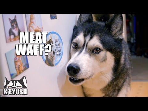 Arguing With My Husky About MEAT WAFFLES! Video.