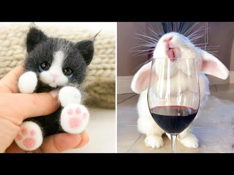 Cutest baby animals Videos Compilation Cute moment of the Animals - Cutest Animals #14