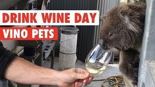 Boozy Pets | Drink Wine Day!