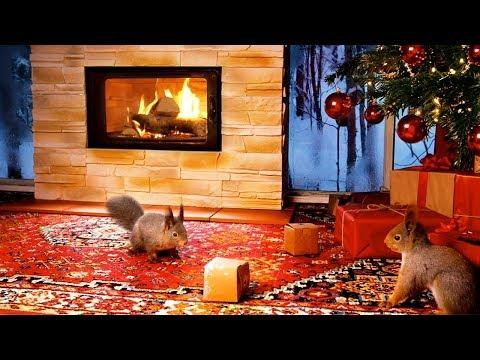 Christmas With Squirrels & Relaxing Christmas Music Video ( 1 Hour )