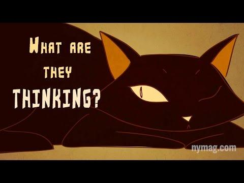 Your Cat Is Talking To You: