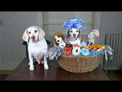 Dog Makes Cutest Gift Basket Ever Video! How To Put Together Gift Baskets with Funny Dogs Maymo & Pe
