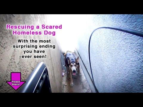 Rescuing A Scared Homeless Dog - With The Most Surprising Ending You've Ever Seen!
