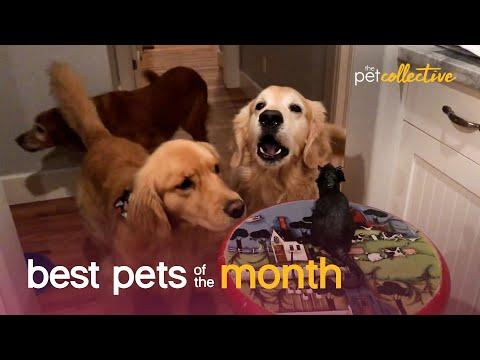 Best Pets of the Month Video (December 2020)