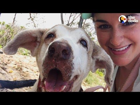 Dog Who Spent 7 Years In The Shelter Is SO Happy To Have A Family