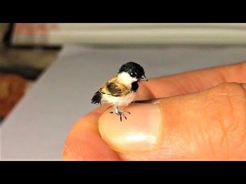 Top 10 Smallest Birds in the World #Video