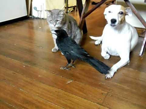 BIRD FEEDS CAT & DOG
