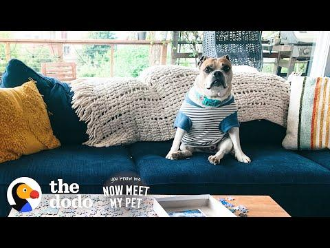 Anxious Rescue Dog Wears Shirts To Make Her Feel Safe Video