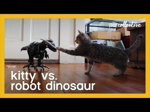 Killer Kitty vs Robot Dinosaur Video