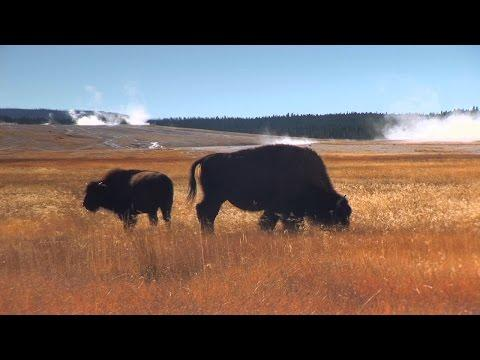 A Relaxing Journey Through The National Parks Of America