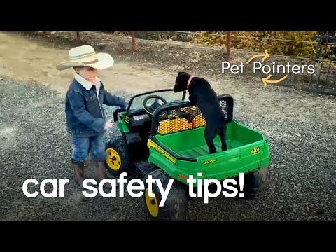 Car Safety Video | Pet Pointers
