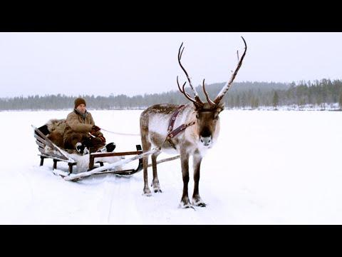 TV Presenter's First Sleigh Ride! | Reindeer Family and Me | BBC Earth