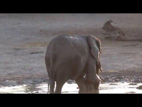 Baby Elephant Doesn't Want To Finish Bath Time