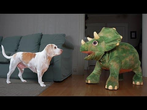 Dogs vs Dinosaurs: Funny Dogs Maymo, Potpie & Penny & Triceratops
