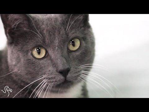 Meet Banjo The Three-Legged Cat