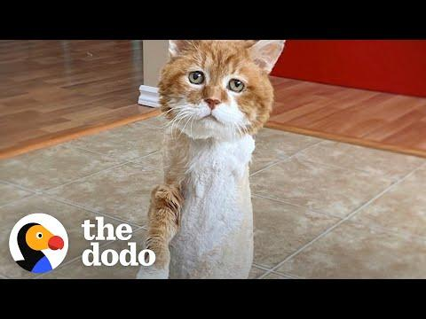 Stray, Three-Legged Cat Who Spent 9 Winters Outside Has His Own Fireplace Now #Video
