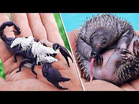This Is What Newborn Animals Look Like Video