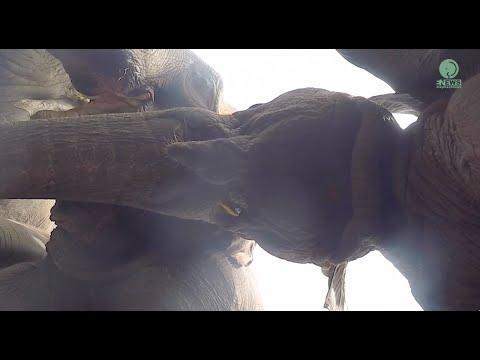 Elephants On The Below Angle - ElephantNews #Video