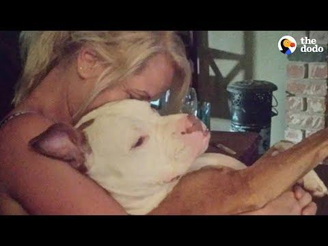 Woman And Shelter Dog Rescue Each Other