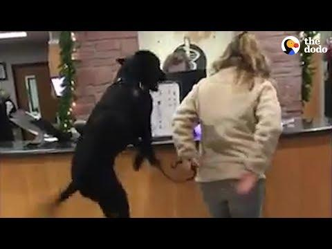 Dog Thinks Going To The Vet Is The Greatest