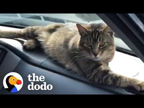 Stray Cat Decides To Work At A Car Shop And Greet Every Customer #Video