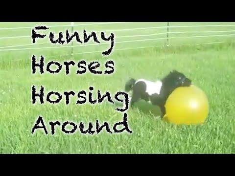 Funny Horses Horsing Around Compilation