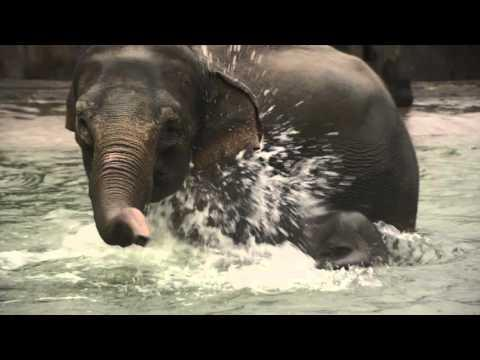 First Swim In The Elephant Pool