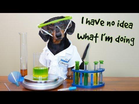 Funny Chemistry Dog! - EXTENDED SCENE w/ Oakley Dachshund!
