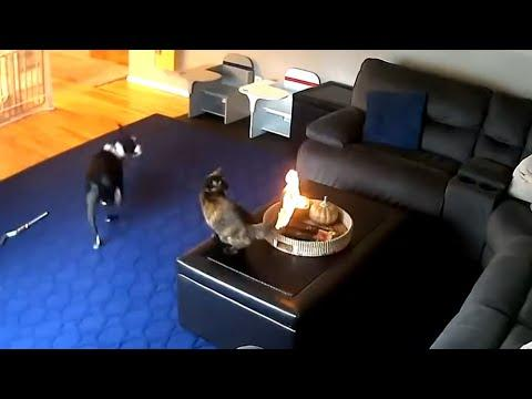 Cat Doesn't Care That It's On Fire Video. Your Daily Dose Of Internet.