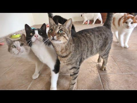 Outdoor Cats' Reaction to Heated Floors and a New Cat Tree !!  #video