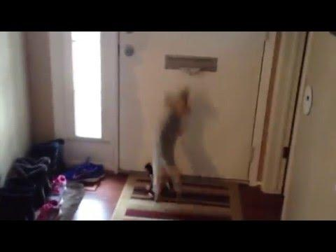 Dog Attacks Mail