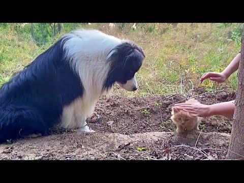 Fluffy Homeless Kitten Saved by Loving Family Dog #Video